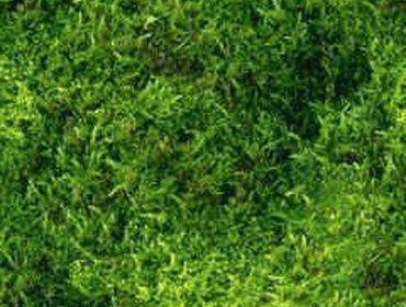 Erba prato grass lawn 46