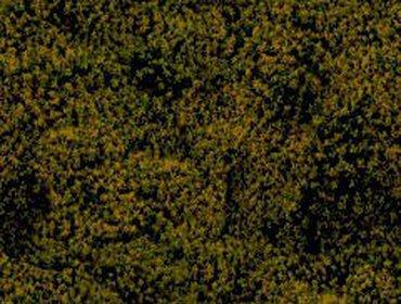 Erba prato grass lawn 51