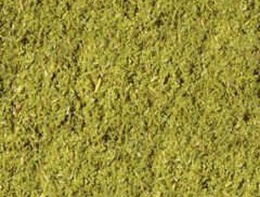 Erba prato grass lawn 52