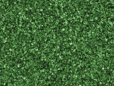 Erba prato grass lawn 55