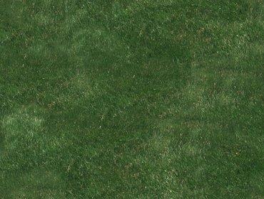 Erba prato grass lawn 56