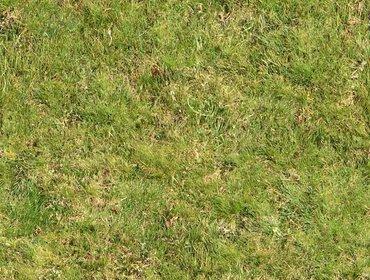 Erba prato grass lawn 57
