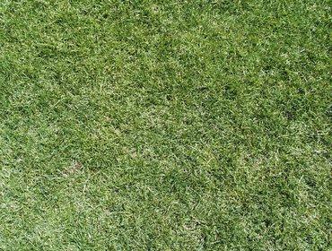 Erba prato grass lawn 60