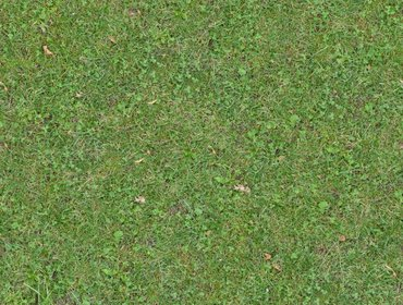Erba prato grass lawn 61