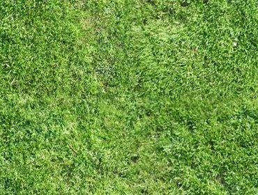 Erba prato grass lawn 63