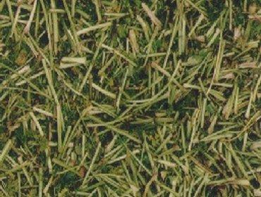 Erba prato grass lawn 64