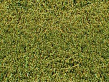 Erba prato grass lawn 66