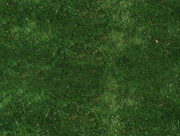 Erba prato grass lawn 69