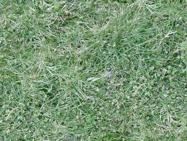 Erba prato grass lawn 71