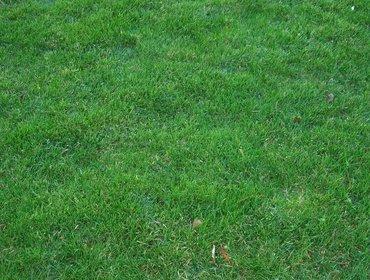 Erba prato grass lawn 76