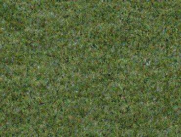 Erba prato grass lawn 77