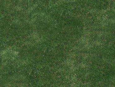 Erba prato grass lawn 79