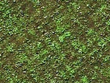 Erba prato grass lawn 81