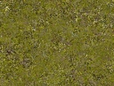 Erba prato grass lawn 88
