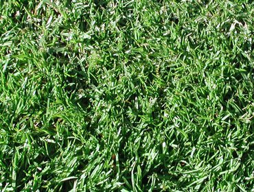 Erba prato grass lawn 89