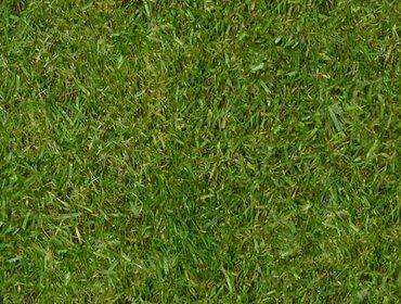 Erba prato grass lawn 97