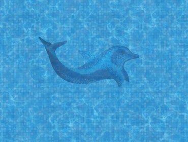 piscina con delfino 2